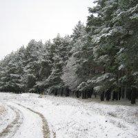 По первому снегу. :: Борис Митрохин