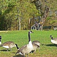 Хорошо, когда в ноябре можно пощипатъ зеленную  травку! :: Galina Dzubina