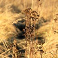 Осень :: Tiana Ros