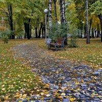 Желтая осень :: Сергей S.Tulpan