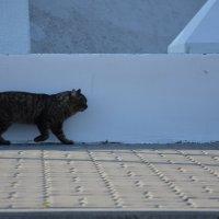 Кот, который гулял сам по себе)))) :: Наталья Мельникова