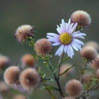 Вспоминая тёплую осень... :: Александр Попов