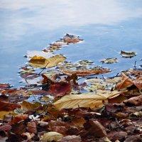 Осень в своем разнообразии :: Наталья (D.Nat@lia)