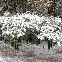 Первый снег. :: Борис Митрохин