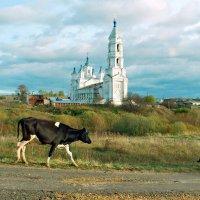 Идут коровы ко дворам своим... :: Александр Архипкин