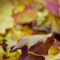 Цвет осени :: Alex Werty