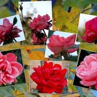 Розы октября... :: Тамара (st.tamara)