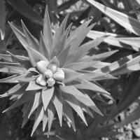 Цветок :: Анастасия