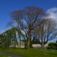Дублинский ботанический сад. :: zoja