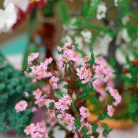 Розовая нежность.Бисероплетение :: Лидия (naum.lidiya)