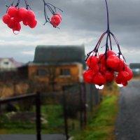 Осень в дачном посёлке :: Юрий