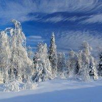 начало зимы :: Анатолий