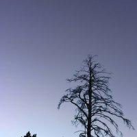 Одинокая :: varona Гасымова