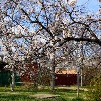 Весна :: Игорь Сикорский