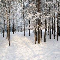 зима :: Елена Шмойлова