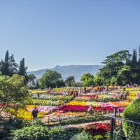 Выставка хризантем :: Варвара