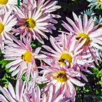 Цветы и пчелки :: Варвара