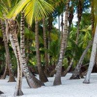 Джунгли из королевских пальм на необитаемом острове :: Евгений Евдокимов