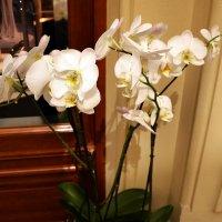 Орхидея :: Владимир Болдырев