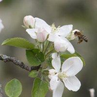 Весна :: Дмитрий Максимовский