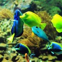 Танцы в аквариуме :: Alexander Andronik