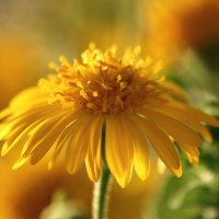 солнечный цветочек :: Ефим Журбин