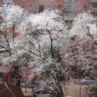 Белая акация, или метаморфозы утреннего тумана :: Леонид