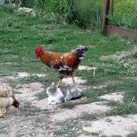 деревенская жизнь :: tgtyjdrf