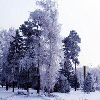 Зима :: раиса Орловская