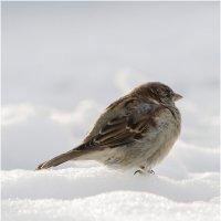 холодно,зима однако! :: oleg
