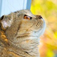 кошка :: Валерия Бунак