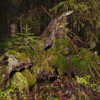 В лесу родилась ёлочка :: Rabbit Photo