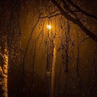 Фонарь и берёза в капельках дождя. :: Анатолий. Chesnavik.