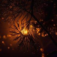 Фото с запахом Нового года. :: Анатолий. Chesnavik.