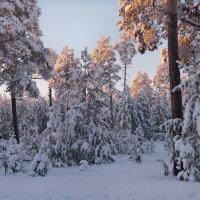 Морозный воздух зимнего заката... :: Татьяна А