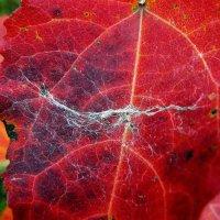 красный цвет осени 3 :: Александр Прокудин