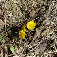 Весна :: Ольга Цветкова