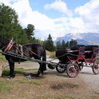 конь :: vasya-starik Старик