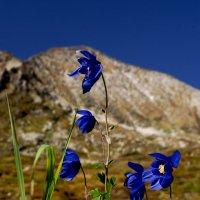 В горах :: Екатерина Короткова
