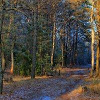 Ноября морозная закатность... :: Лесо-Вед (Баранов)