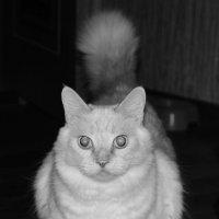 Кошка ))) :: Наталья Мельникова