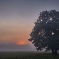 Одинокий... :: Roman Lunin