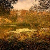 Осень :: Денис Тарасов