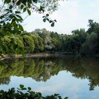 Измайловский парк :: Larisa Ereshchenko