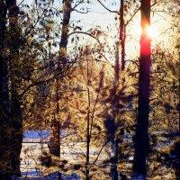 зимнее утро :: Александр Прокудин