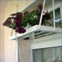 На весеннем балкончике :: Нина Корешкова