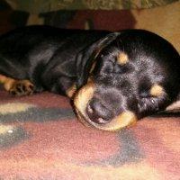 Марси Саймон спит :: Лидия Гаранина