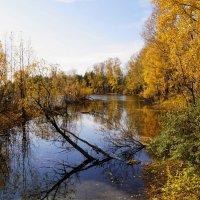 Осенняя запруда :: Наталия Григорьева