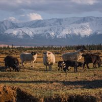 коренные обитатели гор... :: Наталья Маркова