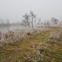 Поздняя осень на туманной реке. :: Виктор Евстратов